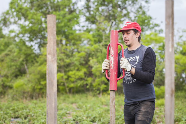 Field crew member Ian uses the post driver the get these stakes in the ground.  Photo by Scott David Gordon