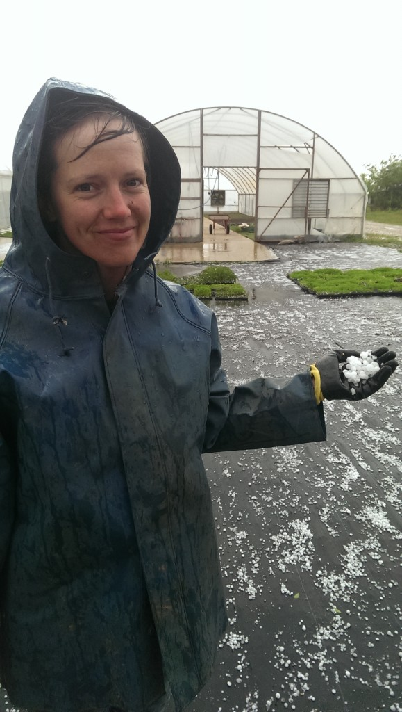 Our Greenhouse Manager, Lindsay, with the second result of the second hail strike.