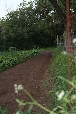 Our CSA Program - Johnson's Backyard Garden
